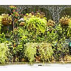 """""""Horticulturist Balcony"""" New Orleans French Quarter by Sandra Russell"""