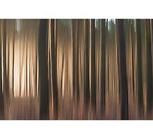 Forest Abstract 11 Photographic Print