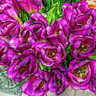 Vibrant Tulips, Bright Purple  by Jane Neill-Hancock