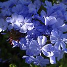 Blue - Azul by Bernhard Matejka