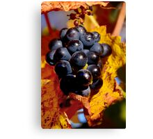 Grapes in waiting ..  Canvas Print