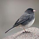 Poor Little One Legged Bird! by barnsis