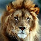 Aslan&#x27;... by Valerie Anne Kelly