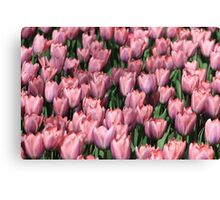 tulip army Canvas Print