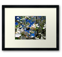 blue skies and a bee Framed Print