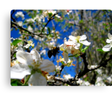 blue skies and a bee Canvas Print