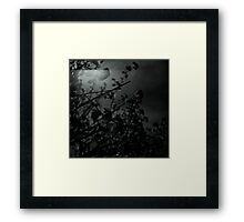 Under exposure with Hasselblad Towards Sun and Tree Framed Print