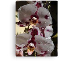 Orchids III - Orquídeas Canvas Print