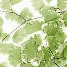 Delicate Fern Leaves  by Sandra Foster