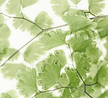Delicate Fern Leaves  by Sandra Foster
