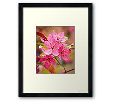 Flowering Crab Framed Print