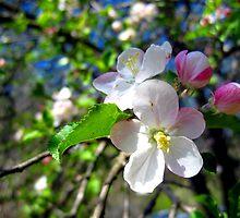 apple blossum treasure 2 by LoreLeft27