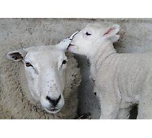 The Lamb Whisperer Photographic Print