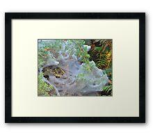 Web Shroud Framed Print