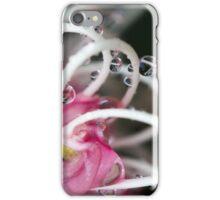 Pink Banksia iPhone Case/Skin