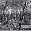 Birch II by pther