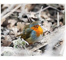 Frosty Robin Poster