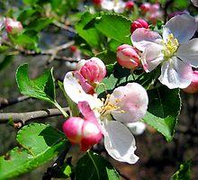 sweetness of spring by LoreLeft27