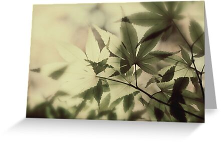 Japanese Maple by FaireUnVoeu