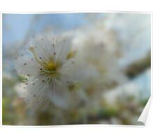 Blossom. Poster