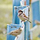 Birds On The Fence by Andrea Hurley