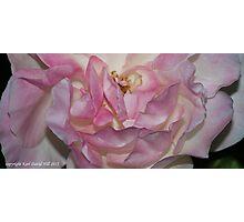 macro flora 015 Photographic Print