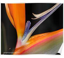 macro flora 016 Poster