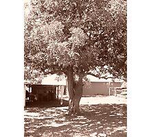 The Tree Of Wisdom Photographic Print