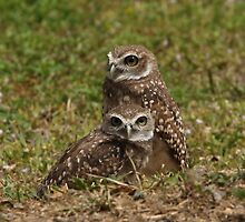 Burrowing Owl Pair by Gail Falcon