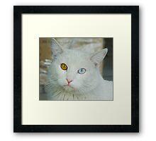 Blue-Brown Eyed Cat Framed Print
