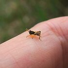 Tiniest Grasshopper I've Ever Seen by Betsy  Seeton