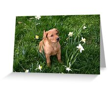 Pup in daffodils Greeting Card