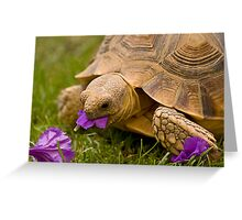 Spring Feast Greeting Card