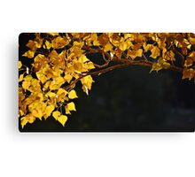 Golden Bower Canvas Print