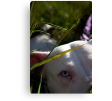 Sapphire in the Grass Canvas Print