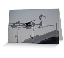 Crows on TV Antenna Collage Greeting Card
