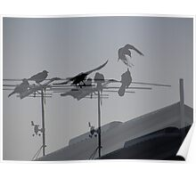 Crows on TV Antenna Collage Poster