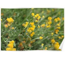 Yellow Flowers. Poster