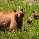 The Three Bears by naturalnomad