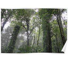 rainforest trees at dorrigo Poster