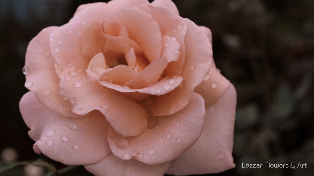 Heart Melting Moments by Lozzar Flowers & Art