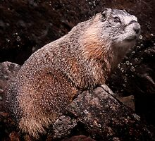 I'm The Nate Silver of Groundhogs by Alex Preiss