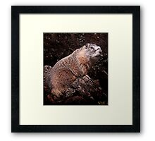 I'm The Nate Silver of Groundhogs Framed Print