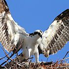 I am lord of this nest! by Larry Baker