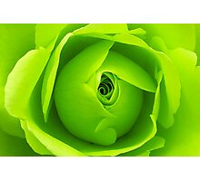 Bright Lime Green Rose Flower Photographic Print