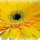 Yellow and black by Karen Tregoning