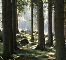 Black Forest by sandib