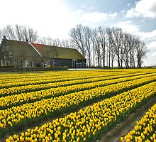 Spring on Flakkee 7 by Adri  Padmos