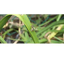 Bee on leaf Photographic Print