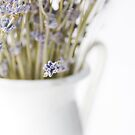 lavender by Ingrid Beddoes